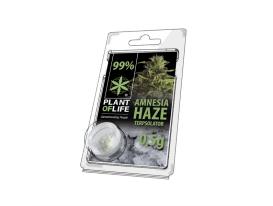 Terpsolator Amnesia Haze 99% CBD - 500mg