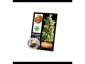 CBD Harz OG KUSH 3,8% 1G Pflanze des Lebens