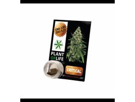 CBD-Harz CRITICAL MASS 3,8% 1G Plant of Life