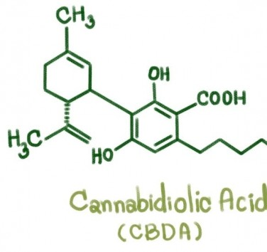 What is the CBDA?