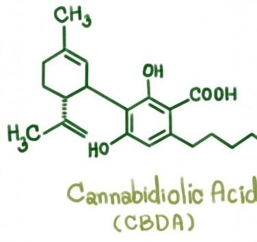 Qu'est-ce que le CBDA ?