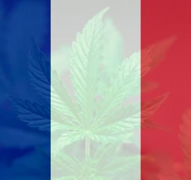 La production et commercialisation du CBD bientôt légalisée en France