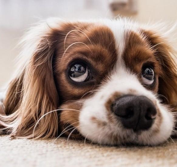 traitement-chien-epileptique