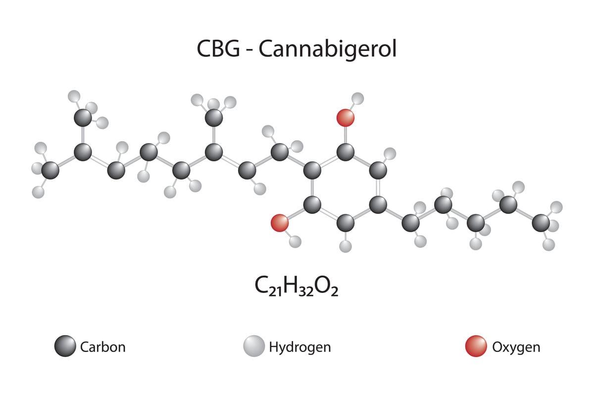 différence entre le CBG et CBD