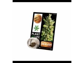 CBD Resin OG KUSH 3,8% 1G Plant of Life